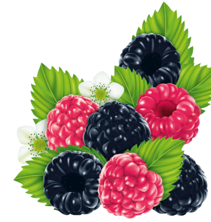 Illustration der HARIBO Berries Beutel: Himbeeren und Brombeeren mit grünen Blättern