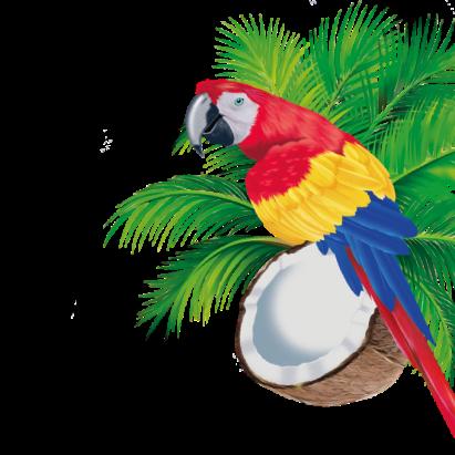 Illustration der Konfekt Beutel: Papagei mit Palmwedel und Kokosnuss