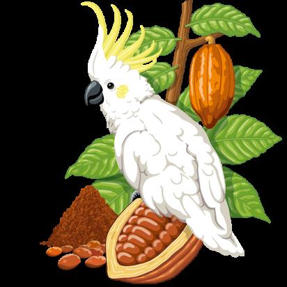 Illustration der Konfekt Schoko Edition Beutel: Kakadu mit Kakaobohnen