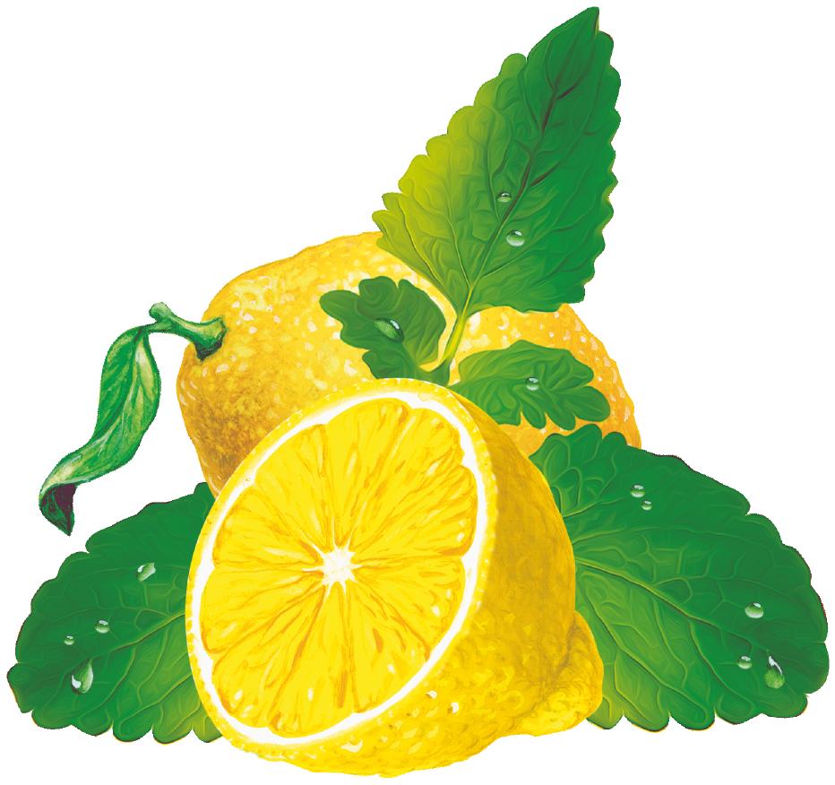 401981459 Bronchiol Zitronenmelisse