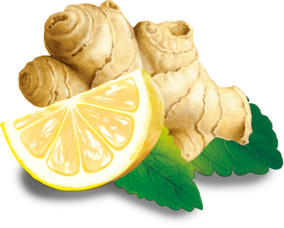 products-illu-Ingwer Zitrone