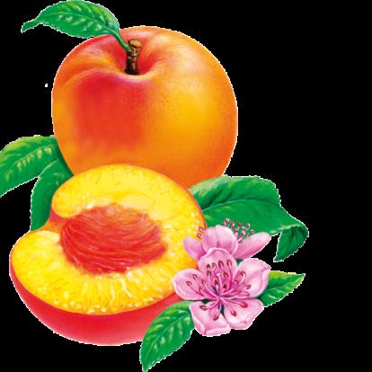 Illustration der Pfirsiche Beutel: ein halber und ein ganzer Pfirsich mit grünen Blättern