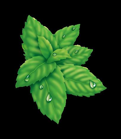 Air Drops Eukalyptus